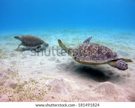 green turtle appetizer menu chease stock images royalty free images vectors shutterstock