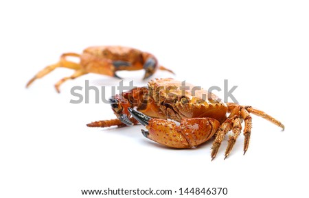 Two seafood red crabs isolated on a white - stock photo
