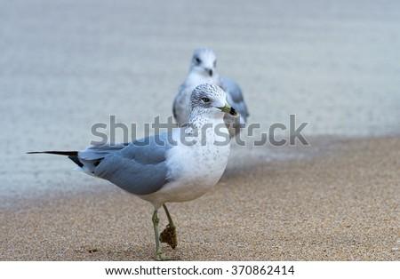Two seagulls - stock photo