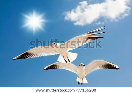 two seagulls are flying against the blue sky - stock photo