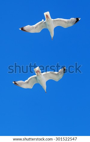two seagulls at the sky