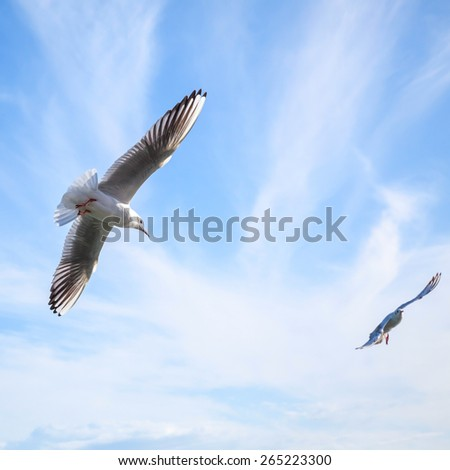 Two seagulls fly on blue cloudy sky background