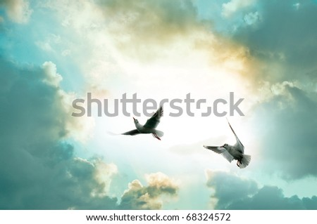 Two seagulls front of the sky