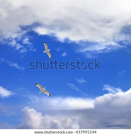 Two seagulls hover in sky with clouds at sun summer day - stock photo