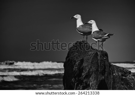 Two seagulls on a rock looking into the sea in black and white - stock photo