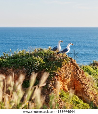 Two seagulls on a rocky shore in the grass. Against the backdrop of the blue sea. - stock photo
