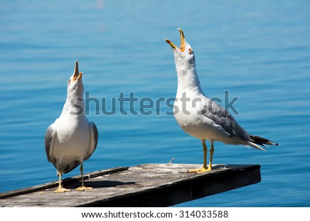 Two seagulls screaming, with blue sea in the background - stock photo