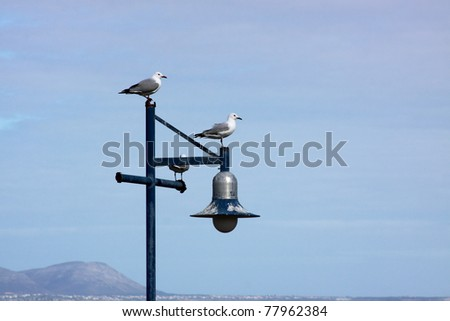 Two seagulls sitting on a lamppost