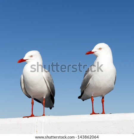 Two seagulls sitting on a white railing at the ocean - stock photo