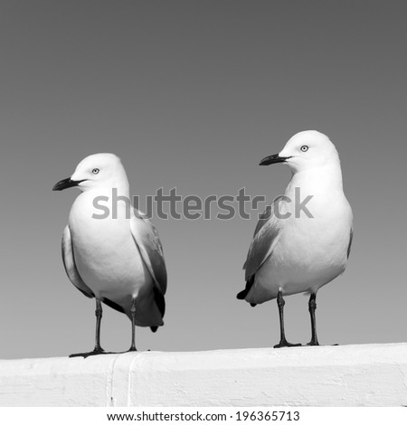 Two seagulls sitting on a white railing at the ocean