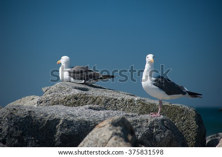 Two  Seagulls sitting over the rocks with the ocean in background at Dockweiler Beach