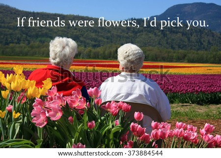 Two senior ladies seated outside, enjoying the view of the tulip fields. Also available without quotes.  - stock photo