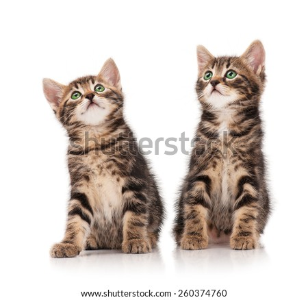 Two serious cute kittens isolated on white background - stock photo