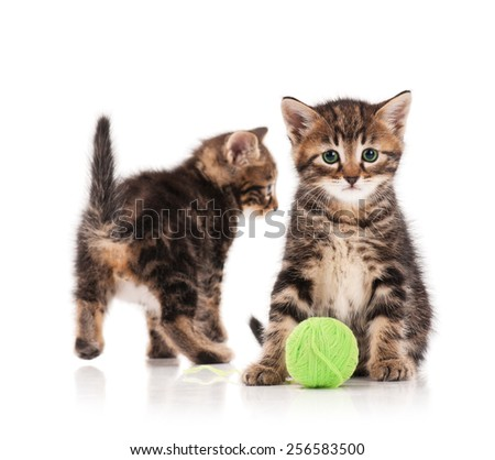 Two serious cute kittens isolated on white background. Focus on the first one - stock photo