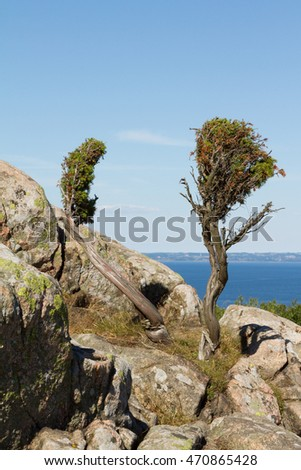 Two shrubs on mossy rocks by the sea