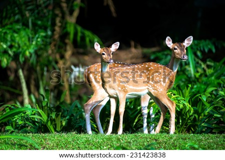 Two sika deer on a background of forest shadows. - stock photo
