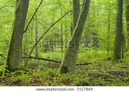 Two skew trees in forest