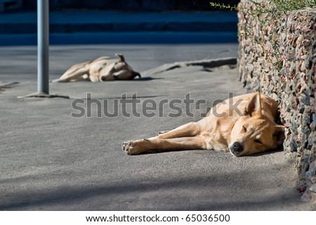 Two sleeping homeless dogs in street - stock photo