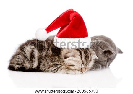 two sleeping kittens with santa hat. isolated on white background - stock photo