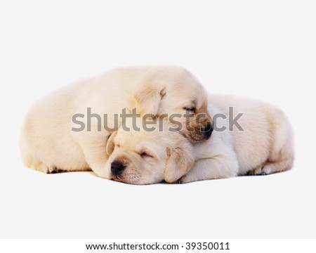 Two sleeping puppies. - stock photo