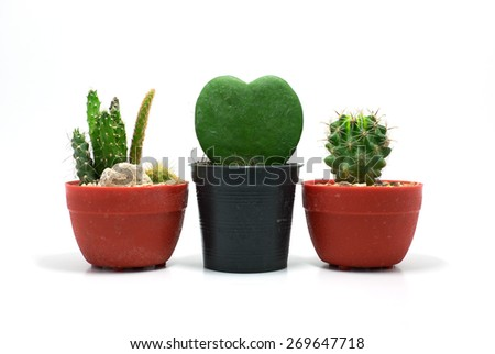 Two small cactus in two red flowerpots and one green heart cactus in black flowerpot white background isolated - stock photo