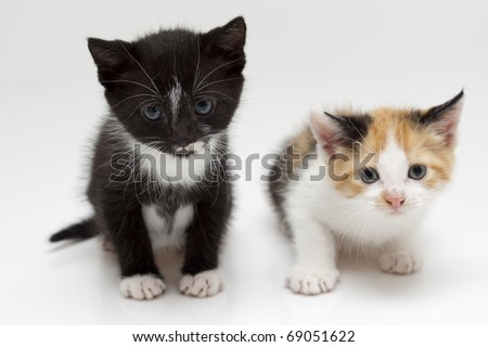 Two small cats on white background - stock photo