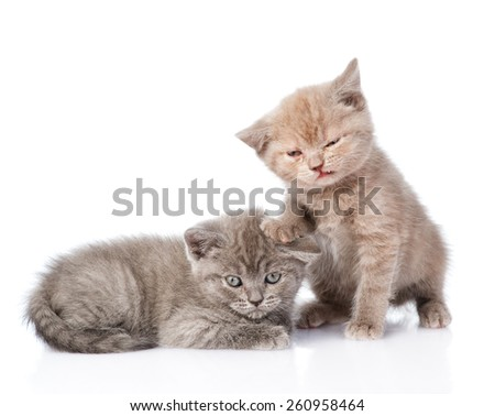 two small funny kittens. isolated on white background - stock photo
