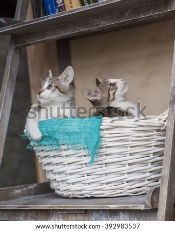 two small gray white kittens are playing in the basket