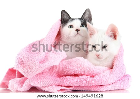 Two small kitten in pink towel isolated on white - stock photo