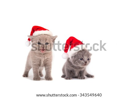 Two small kitten in the cap of Santa Claus. Cat one month.