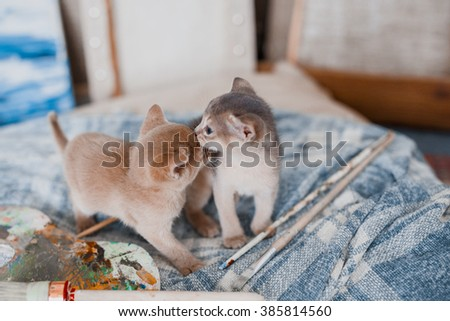 two small kittens and paint