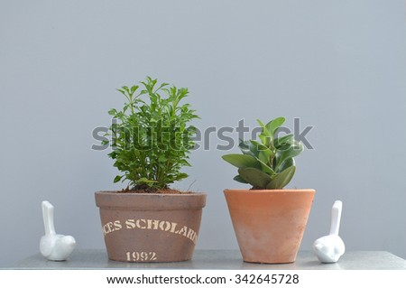 two small plant in potted and two fake birds ceramic gray background - stock photo