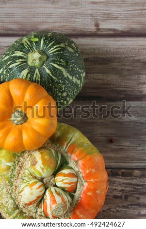 Two small pumpkins isolated with space of text