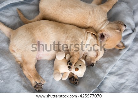 Two Small Puppies Sleeping on Bed Side by Side with Favorite Toys