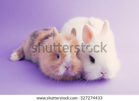 Two small rabbits sitting on lavender background