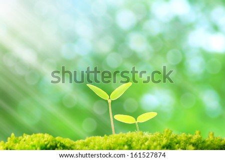 Two small sprouting plants with green leaves. - stock photo
