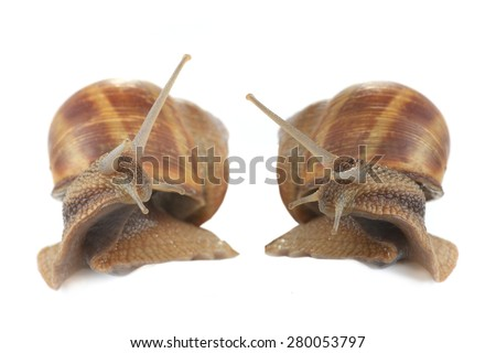 two snail isolated on a white background