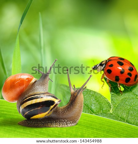 Two snails and ladybug looking at green background. Nature concept - stock photo