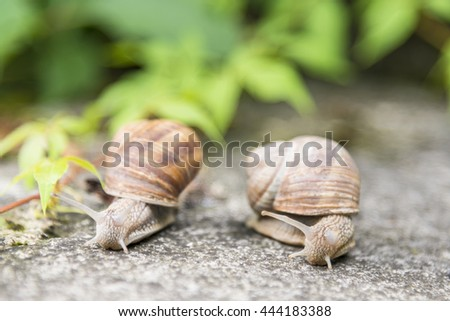 Two snails on the old stone.