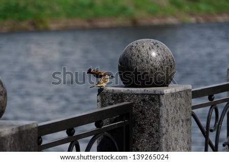 Two sparrows on the handrail of the bridge by the river - stock photo