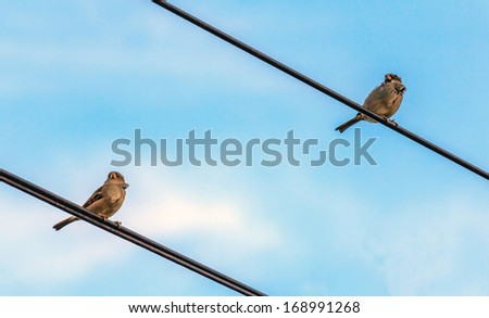 Two  sparrows sitting on the wire and looking in the same direction against the background of blue sky - stock photo