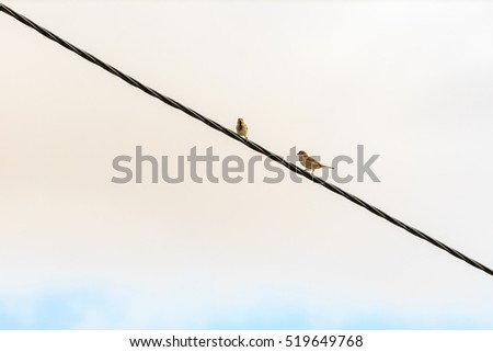 Two sparrows sitting on wires