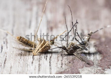 Two species of mosquitoes cause of dengue and malaria. - stock photo