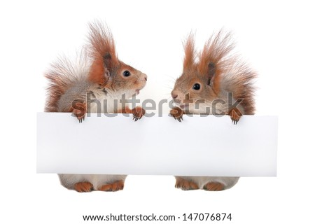 two  squirrel  with sheet for a text writing - stock photo