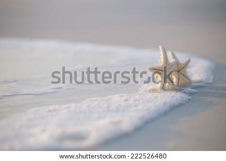 two starfish on sea ocean beach in Florida, soft gentle sunrise light color - stock photo