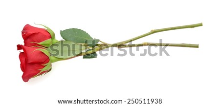two stem fresh red roses for gift - stock photo