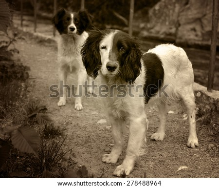 Two stray dogs - stock photo