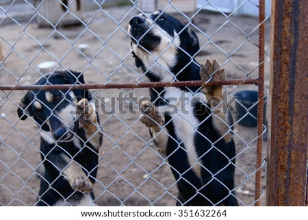 two stray dogs in shelter locked behind mesh