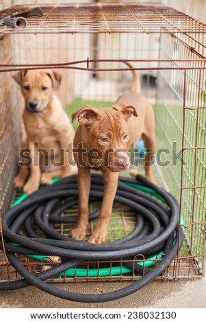 Two stray puppies wait in  at animal shelter - stock photo