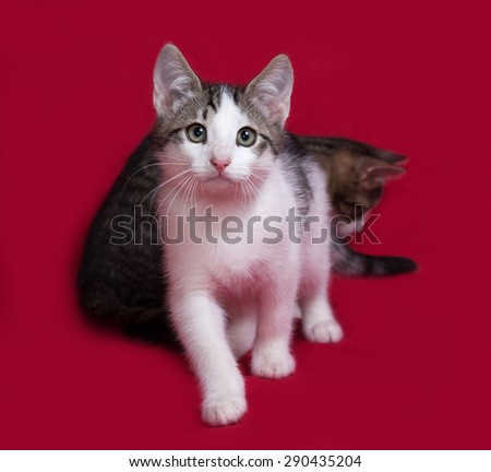Two striped and white kitten sitting on red background